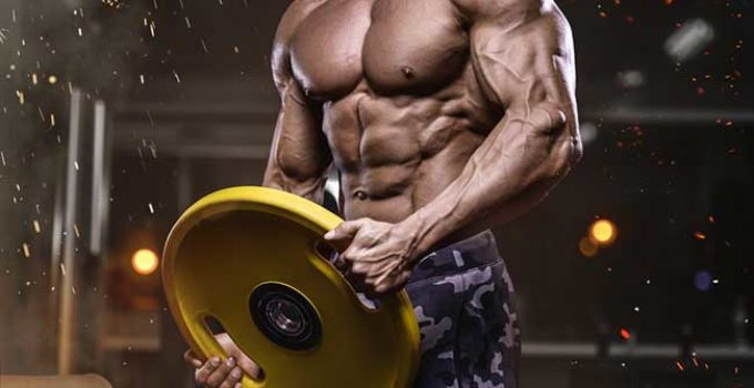 Arachidonic Acid Supplements Bodybuilding